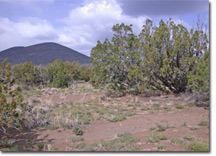 10 acres in Flagstaff